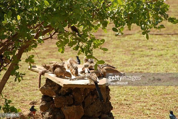 Vögel und Erdhörnchen HotelAnlage 'Severin Safari Camp' 'Tsavo West Nationalpark' KitaniRegion zwischen Mombasa und Nairobi Kenia Ostafrika Afrika...