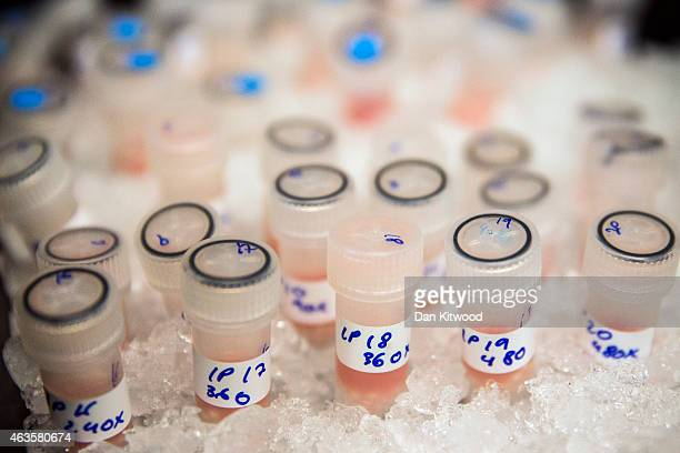 Vials containing biological samples are stored on ice to keep them fresh before being analysed to see how they are affected by chemotherapy drugs at...