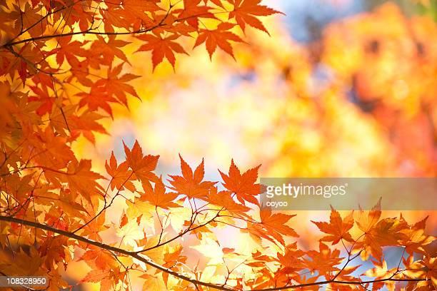 鮮やかな秋の色