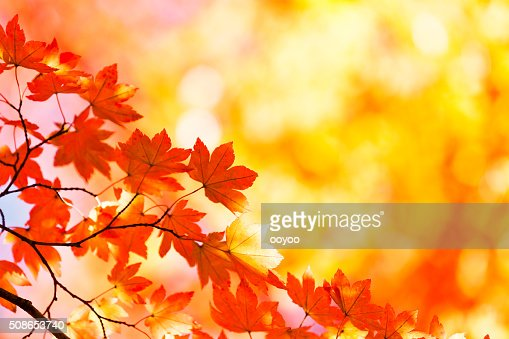 Vibrant Autumn Colors : Stock Photo