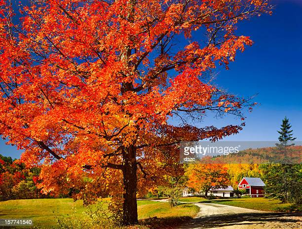 vibrant autumn maple tree, country road and Vermont countryside