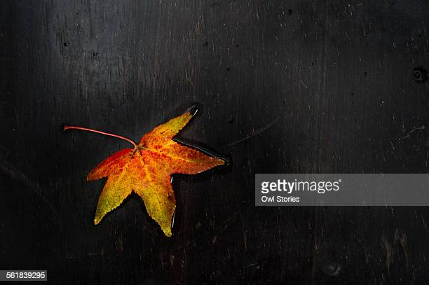 Vibrant colored leaf against black background