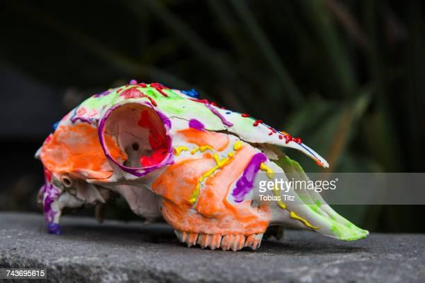 Vibrant colored paint on animal skull on stone