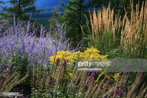 Vibrant Colors Of Late Summer And Fall Perennials Stock