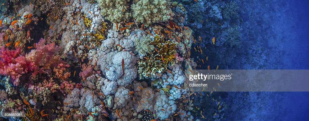 Vibrant Coral Reef : Stock Photo