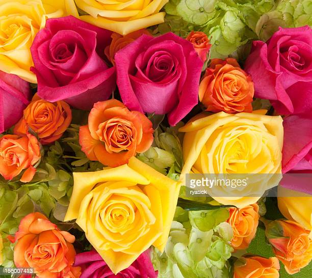 Vibrant Floral Background of Roses and Hydrangea