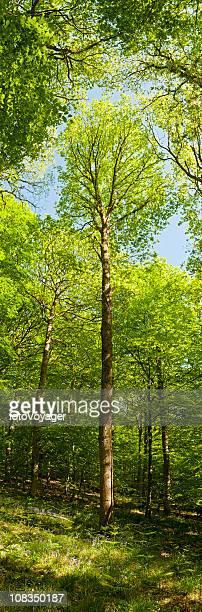 Vibrant forest vertical green tree foliage summer wilderness woods banner