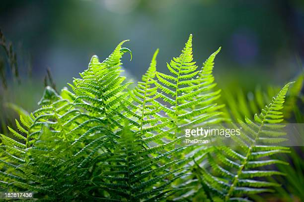 Vibrant green fern against blurred background