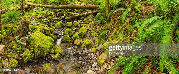 Vibrant green forest mossy stream ferns