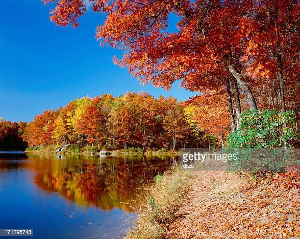 鮮やかなオレンジの紅葉、青空、穏やかな湖、反射、動作電圧