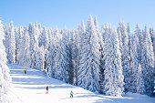 Vibrant panorama of the slope at ski resort Kopaonik, Serbia, people skiing, snow pine trees, blue sky