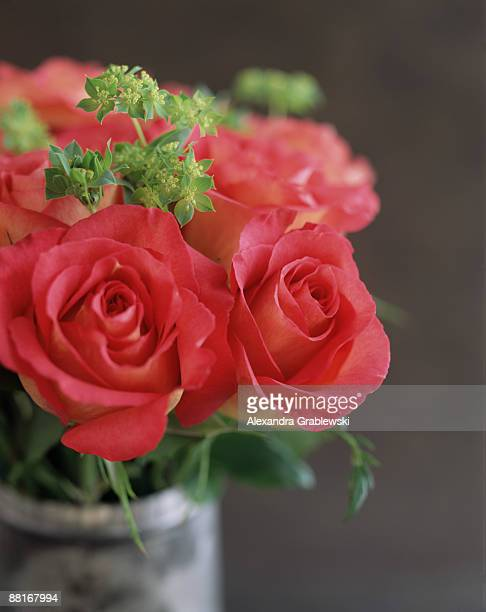 Vibrant pink roses in elegant bouquet