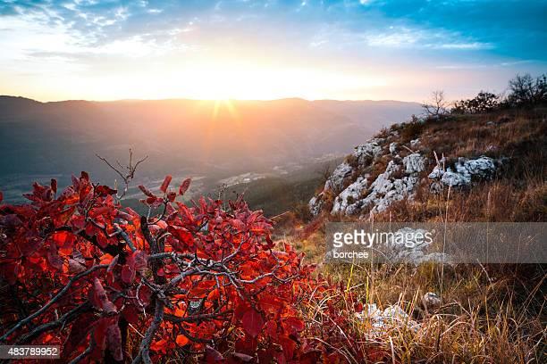 Roten Herbst Bush bei Sonnenuntergang