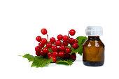 viburnum berries elixir in small glass bottle, isolated on white background