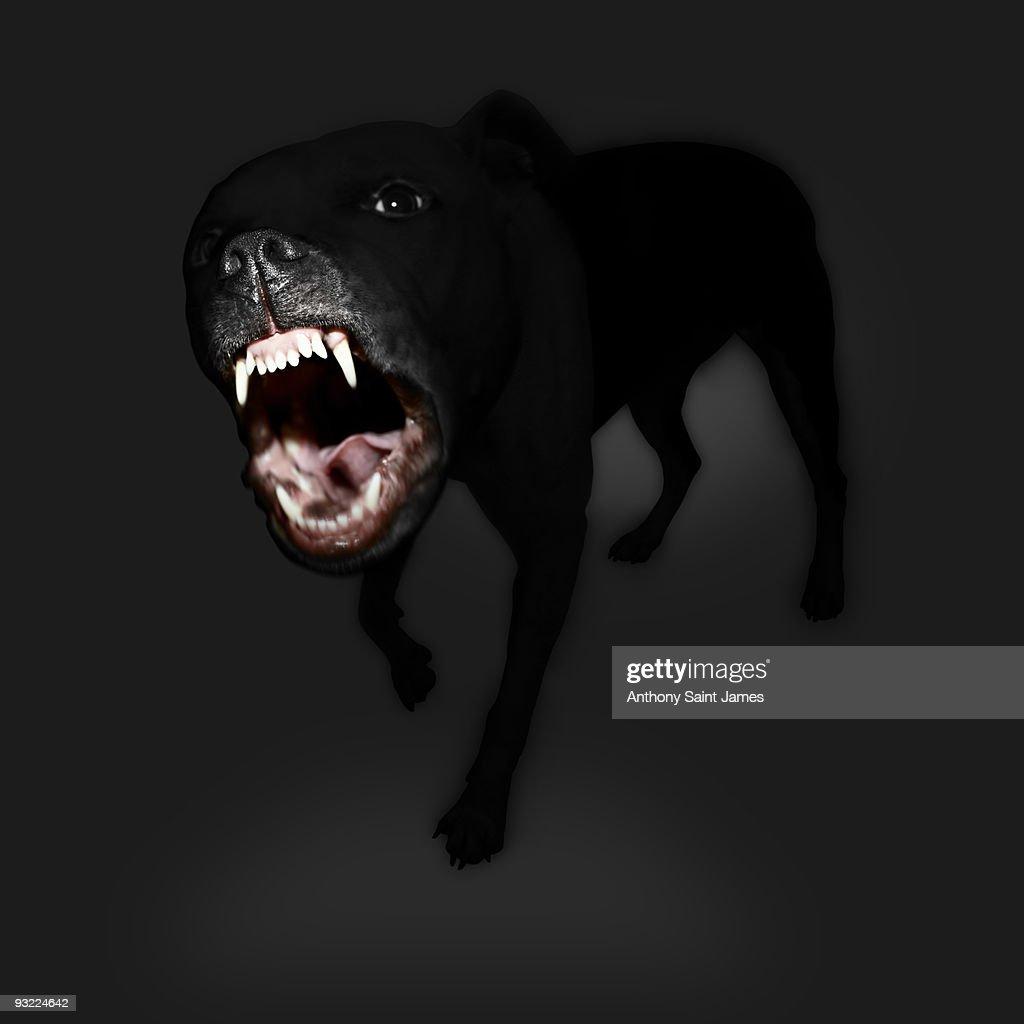 Vicious Black Dog