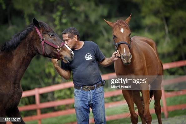 Victor Cutino plants a kiss on the nose of rescued horse Haven left as he holds onto Dreamer with his other hand February 28 2013 Cutino runs a horse...