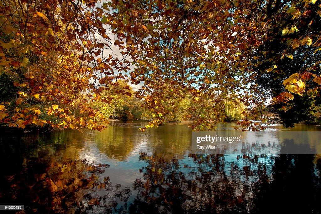 Victoria Park tree reflections