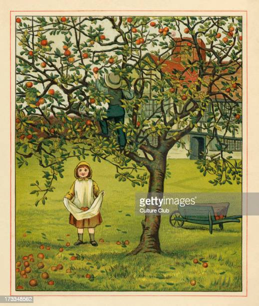 Victorian children collecting apples an illustration by JG Sowerby A brother climbs a tree to pluck the apples while his sister waits below and...