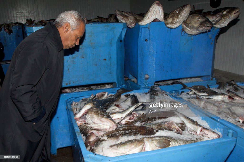 Victorin Lurel, minister for Overseas France, inspects cod on February 8, 2013 in Saint-Pierre, Saint-Pierre et Miquelon, a self-governing territorial overseas collectivity of France, situated in the northwestern Atlantic Ocean near Canada, as he starts a two day visit to the archipelago to discuss economic development. AFP PHOTO/Jean-Christophe L'Espagnol