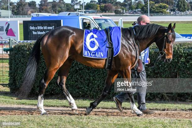 Victory Downs before the Murray Downs Swan Hill Cup at Swan Hill Racecourse on June 11 2017 in Swan Hill Australia