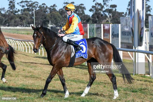 Victory Downs ridden by Damien Thornton returns to scale after winning the Murray Downs Swan Hill Cup at Swan Hill Racecourse on June 11 2017 in Swan...