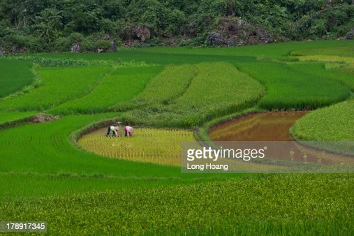 Vietnam countryside landscape : Stock Photo