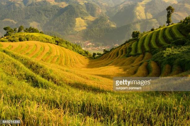 Vietnam mountain rice terraces
