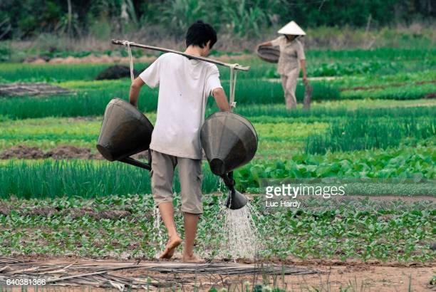 Vietnamese farmer watering field