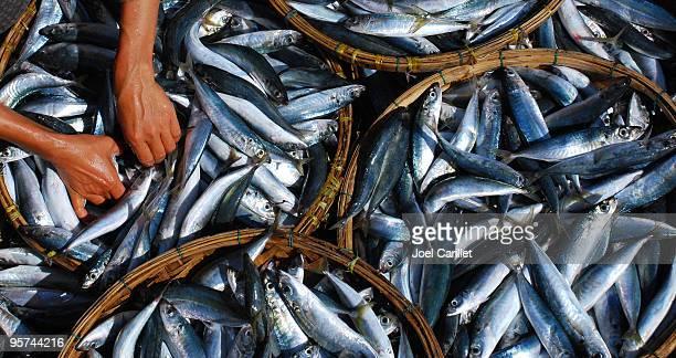 Cuisine vietnamienne mains au travail de tri poissons à Hoi An
