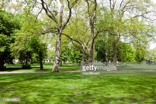 View across shady grass into park : Stock-Foto