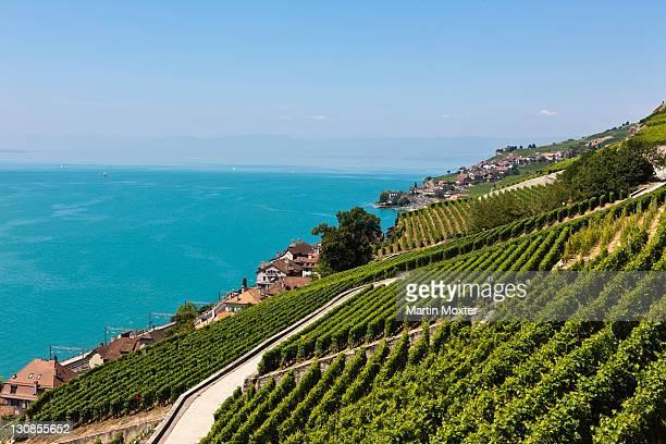 View across the vineyards near Vevey towards St Saforin, Lake Geneva at back, Vevey, Canton Vaud, Lake Geneva, Switzerland, Europe