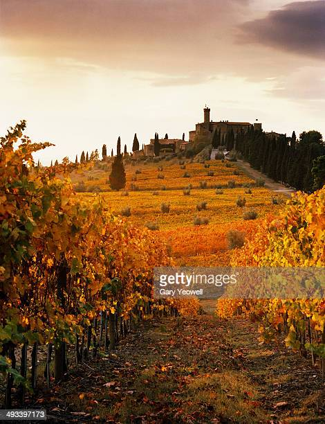 View across Tuscan vineyards in Autumn