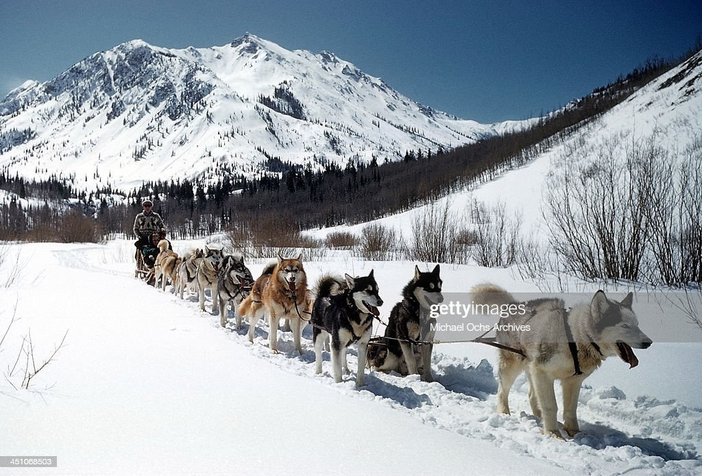 A view as a sled dog team in the snow in Aspen Colorado