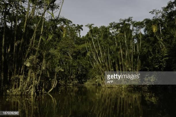 View from a lake in the Ecuadorean Yasuni National Park Orellana province Ecuador on November 10 2012 The Yasuni National Park contains Ecuadors...
