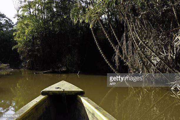 View from a lake in the Ecuadorean Yasuni National Park Orellana province Ecuador on November 10 2012 The Yasuni National Park contains Ecuador's...