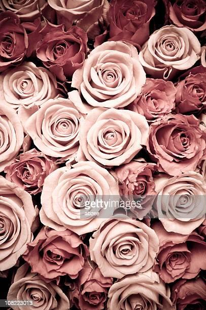 ビュー上のオープンからのライトグリーンとダークピンクのバラ