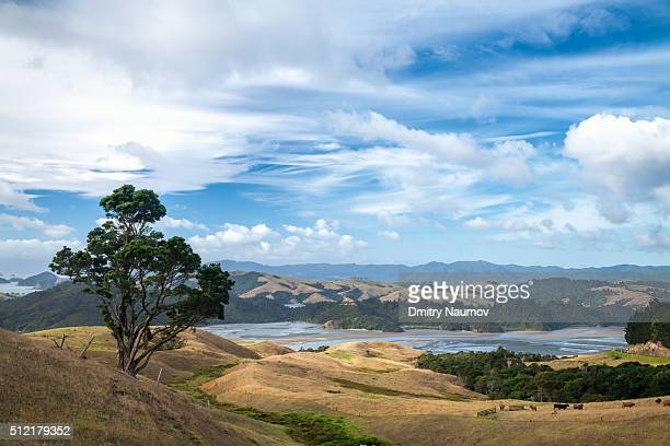 View from Highway 25 to Manaia Harbour at low tide in New Zealand
