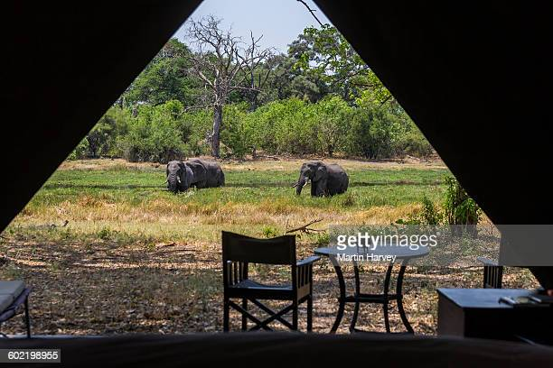 View from inside luxury tent onto the river bank with elephants grazing, Machaba Camp, Okavango Delta, Botswana