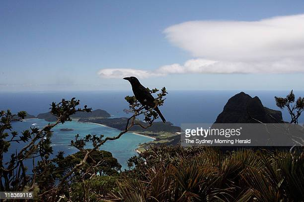 View from Mount Gower overlooking Lord Howe Island NSW A programme has been established to rid the island of ship rates and house mice
