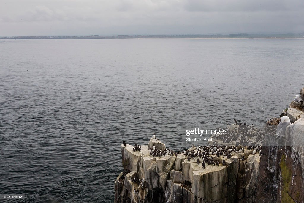 View from the Farne Islands to the coast of Northumberland, England, United Kingdom, Europe