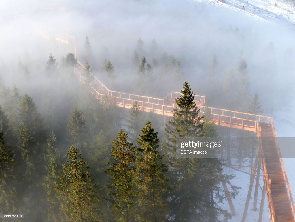 Take A Stunning Treetop Walk In The Mountains In Slovakia