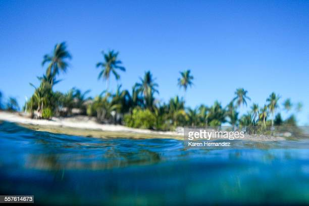 View from the water of island with coconut trees