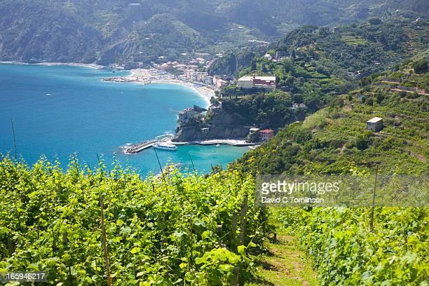 View from vineyard, Monterosso, Liguria, Italy