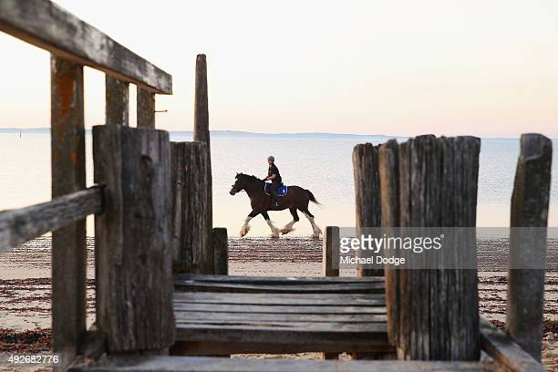 A view is seen through a rotted jetty as a Clydesdale horse canters by at Balnarring Beach on October 15 2015 in Melbourne Australia Balnarring Beach...
