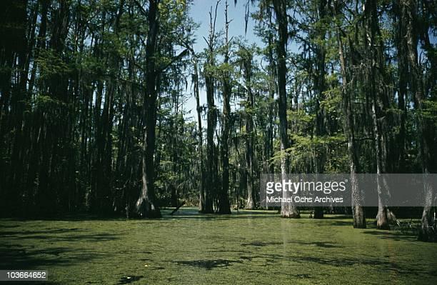A view of a bayou circa 1950 in Louisiana