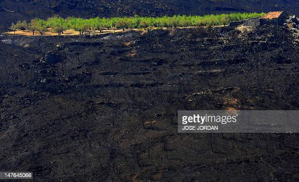 A view of a burnt house and trees which survived the passage of a wildfire surrounded by burnt trees and ash in Alcublas near Castellon on July 02...