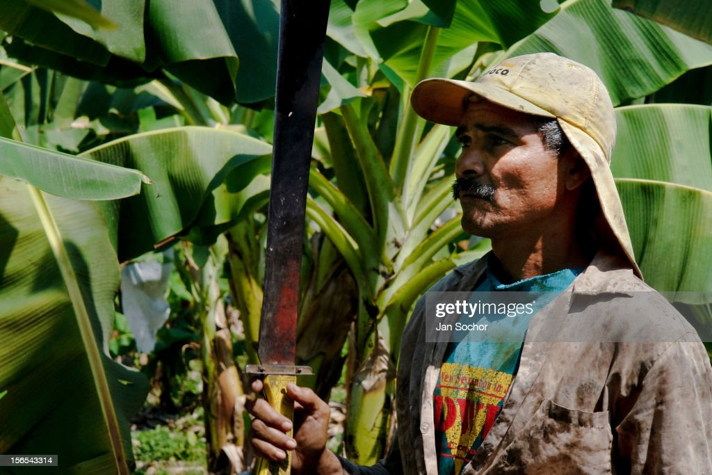 Image result for colombian banana farms