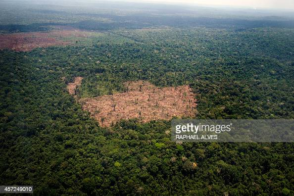 View of a deforested area in the middle of the Amazon jungle during an overflight by Greenpeace activists over areas of illegal exploitation of...