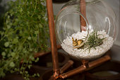 View of a doityourself terrarium using pea gravel a succulent and a goldpainted bunny in Ashburn VA on January 12 2015 There's a resurrgent interest...