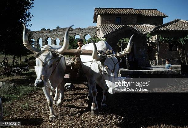 ITLAY A view of a farmer and his oxen on the road from Naples to Rome